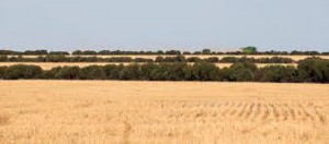 Southern Mallee Farm