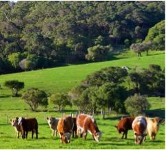 rural-opportunities