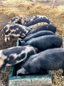 Springview Eco Farm Small